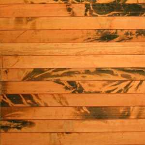 бамбук золотая черепаха для шкафов-купе