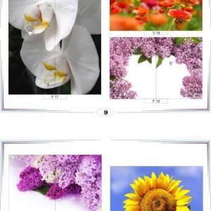 фотопечать для шкафов купе цветы 9 и 10