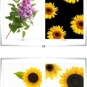 фотопечать для шкафов купе цветы 11 и 12