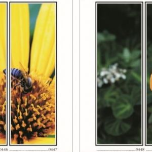 фотопечать для шкафов купе цветы 113 и 114