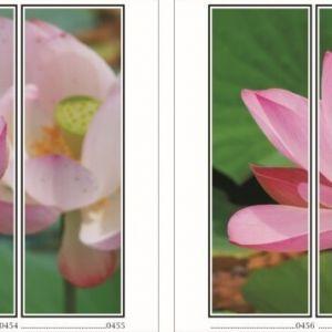 фотопечать для шкафов купе цветы 115 и 116