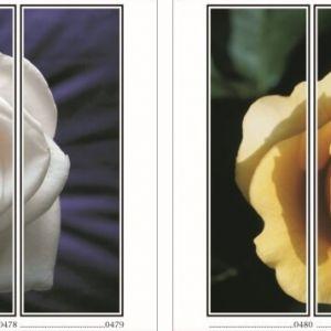 фотопечать для шкафов купе цветы 121 и 122