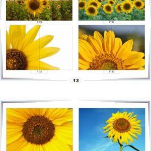 фотопечать для шкафов купе цветы 13 и 14