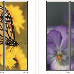 фотопечать для шкафов купе цветы 147 и 148