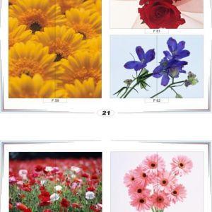 фотопечать для шкафов купе цветы 21 и 22