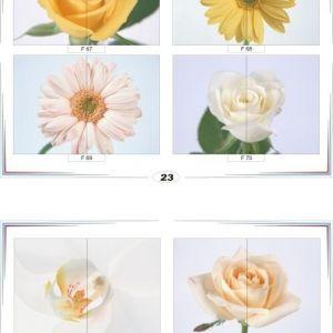 фотопечать для шкафов купе цветы 23 и 24