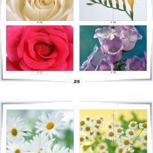 фотопечать для шкафов купе цветы 25 и 26