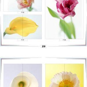 фотопечать для шкафов купе цветы 29 и 30