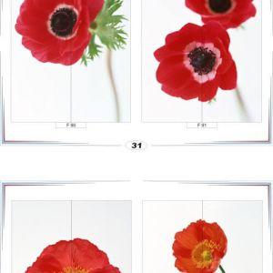фотопечать для шкафов купе цветы 31 и 32