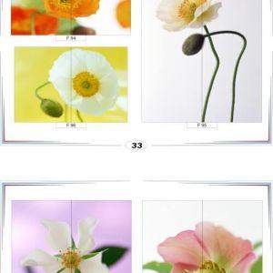 фотопечать для шкафов купе цветы 33 и 34