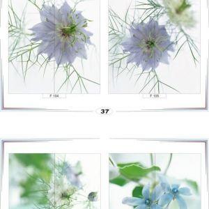 фотопечать для шкафов купе цветы 37 и 38