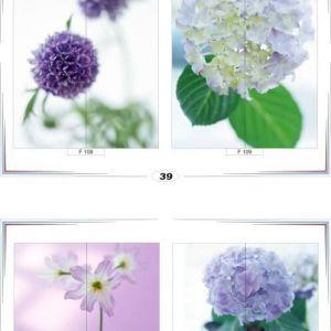 фотопечать для шкафов купе цветы 39 и 40