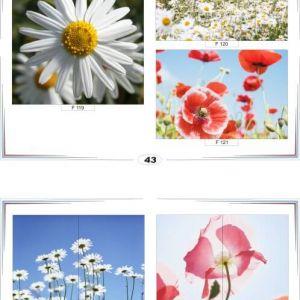 фотопечать для шкафов купе цветы 43 и 44