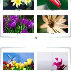 фотопечать для шкафов купе цветы 45 и 46