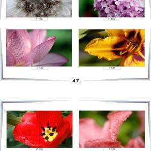 фотопечать для шкафов купе цветы 47 и 48