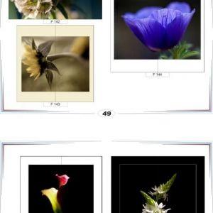 фотопечать для шкафов купе цветы 49 и 50