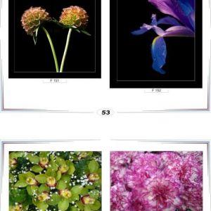 фотопечать для шкафов купе цветы 53 и 54