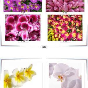 фотопечать для шкафов купе цветы 55 и 56