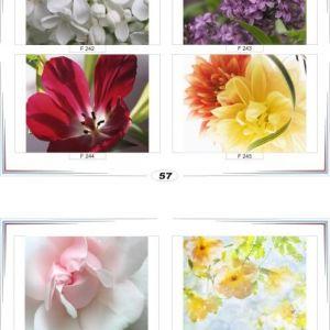 фотопечать для шкафов купе цветы 57 и 58