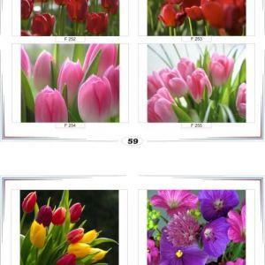 фотопечать для шкафов купе цветы 59 и 60