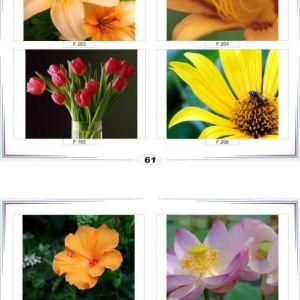 фотопечать для шкафов купе цветы 61 и 62