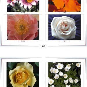 фотопечать для шкафов купе цветы 63 и 64