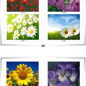 фотопечать для шкафов купе цветы 65 и 66