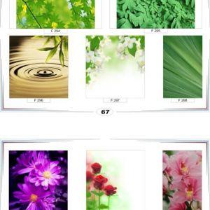 фотопечать для шкафов купе цветы 67 и 68