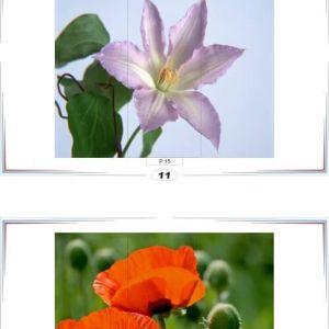 фотопечать природа 11 и 12