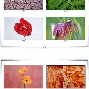 фотопечать природа 13 и 14