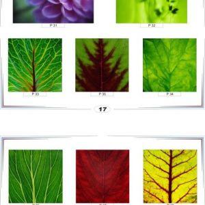 фотопечать природа 17 и 18