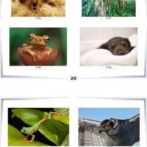 фотопечать природа 25 и 26